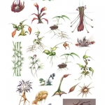 HD_Plants