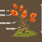 Plant_D